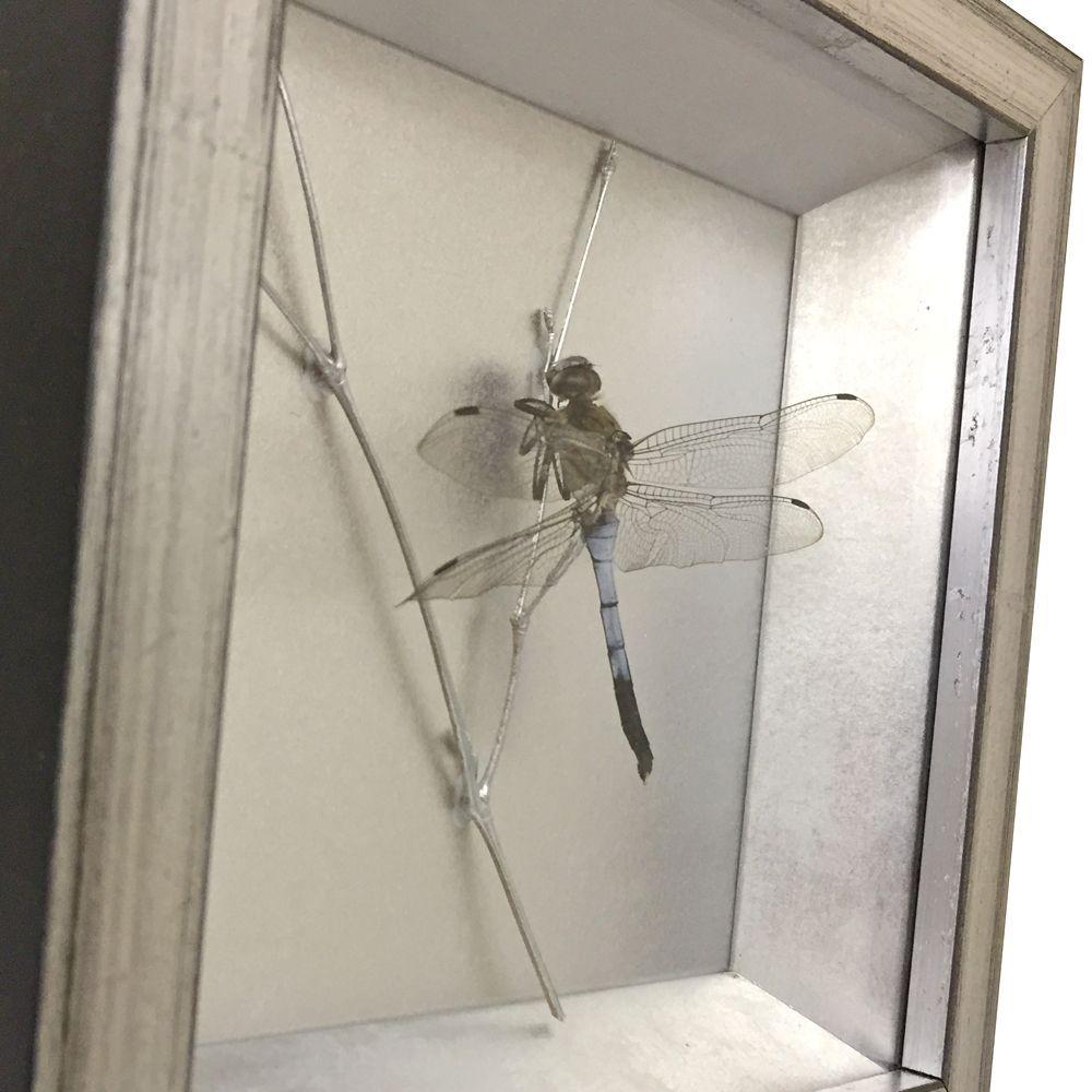 昆虫標本 トンボ           /                         額縁の中に小枝を置いて、トンボの標本を飾りました